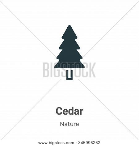 Cedar icon isolated on white background from nature collection. Cedar icon trendy and modern Cedar s