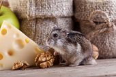 Rodent heaven - hamster or mouse in the old pantry poster