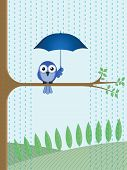 Bird sheltering from the rain sat on a tree branch poster