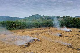 Rain forest land burned to make way for palm oil plantations. Deforestation environmental problem