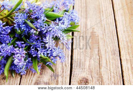 Bouquet Scilla