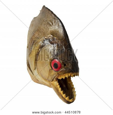 Dried piranha from Surinam, isolated on white with coming out of the picture effect poster