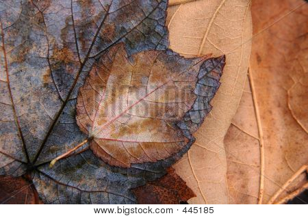 Autumn Leaves In Brown