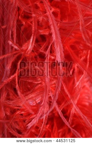 Detail Of A Red Feather Boa