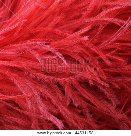 Red Ostrich Feather Boa