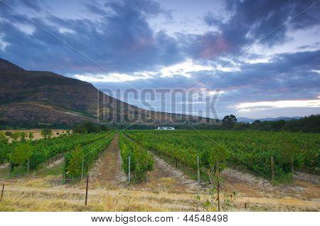 Wine Farm, Stellenbosch.south Africa