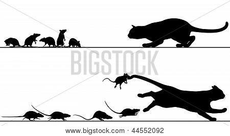 Ratten jagen Katze