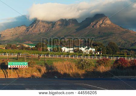 Vineyards, Stellenbosch, South Africa.