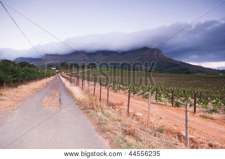 Stellenbosch Wine Lands Region Near Cape Town..