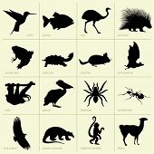 Set of animals of South America on light yellow background poster