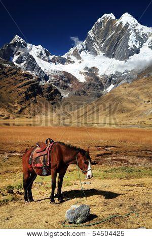Horse in Cordiliera Huayhuash, Laguna Jahuacocha, Peru, South America poster