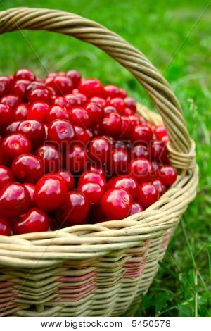 Basket With Cherries