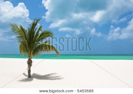 Palm Tree On Beach In Mexico