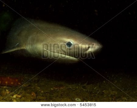 Rarely seen in the wild the six gill shark can grow to 20 feet. poster