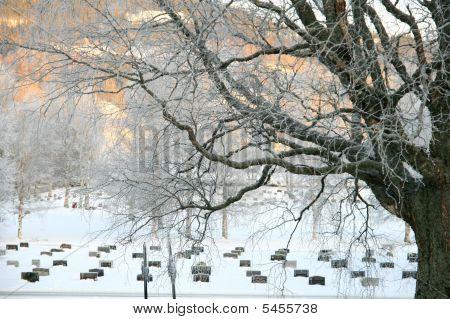 Cemetery In Winter