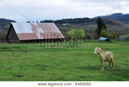 Horse pony standing in front of barn on a green grass field poster