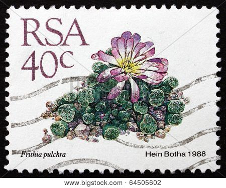 Postage Stamp South Africa 1988 Window Plants, Succulent Plant