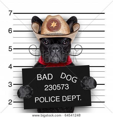 Mexican Mugshot Dog