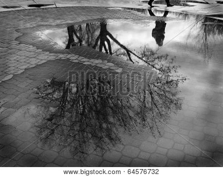 Puddle reflection of tree and person walking past cobblestone walkway
