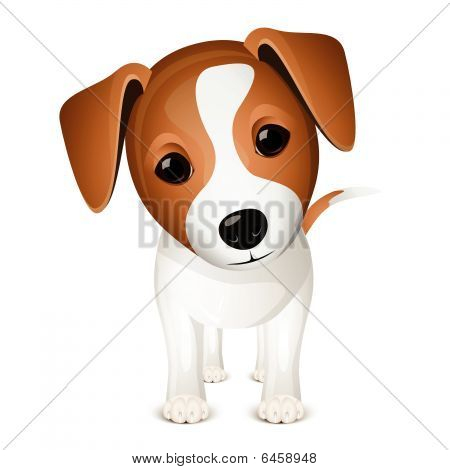 Little jack russel isolated on white background poster