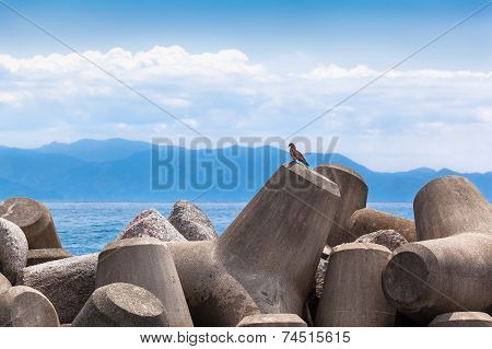 Bird of Prey and Tetrapods