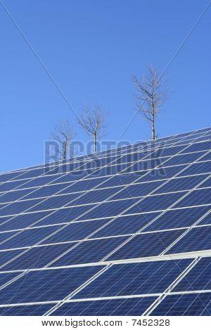 Sun Energy Farm