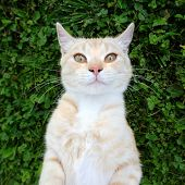 A cute cat taking a selfie against green grass background poster