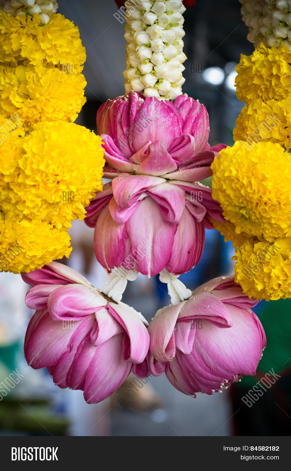 Pink Lotus Flowers Image Photo Free Trial Bigstock