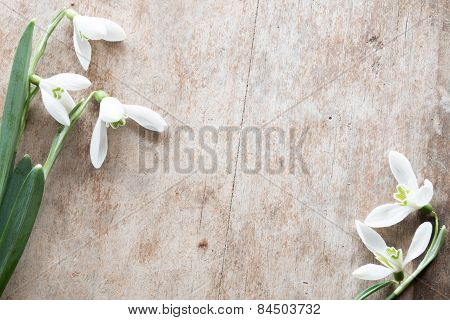 Beautiful Snowdrops On Wooden Background.