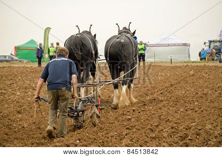 Horse drawn ploughing championship