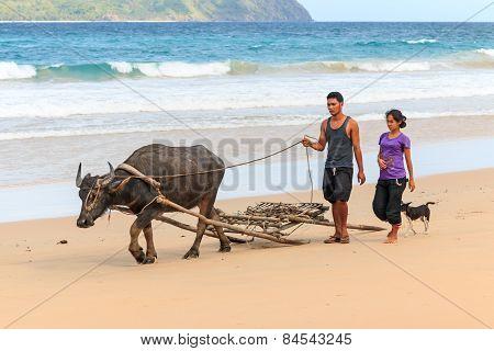 Nacpan, Philippines - January 18,2015: Farmers Of Nacpan Walking On The Beach With A Carabao, The Wa