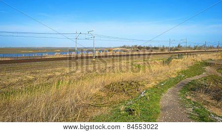 Heck cattle grazing along a railroad in winter