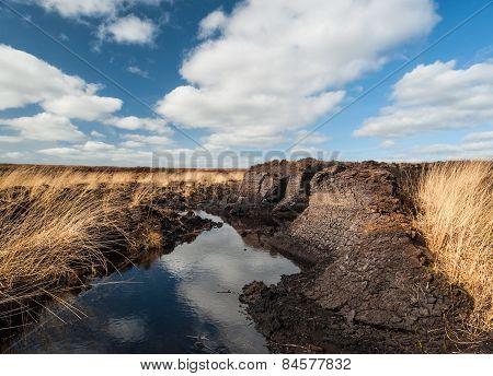 Irish peat Bog landscape
