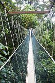 Canopy walkway. Taman Negara National Park. Malaysia poster