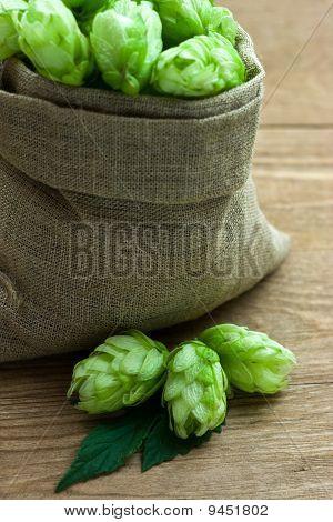Hop in a burlap bag on wooden background