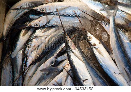 Fish In Harbour