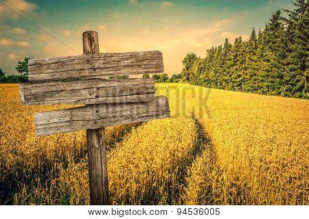 Golden Crop Field Scenery