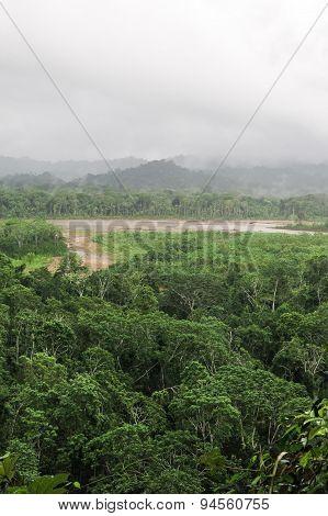 Rainforest.