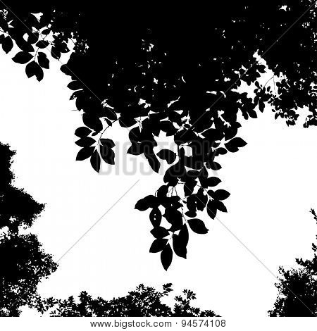 Birdcherry tree branch silhouette, vector