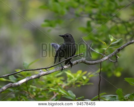 Black Bird On Branch
