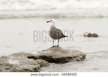Seagull Perched On Rock