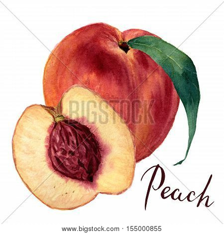 Watercolor peach with leaf and half cut peach. Hand drawn food illustration on white background. For design, textile and background. Realistic botanical illustration.
