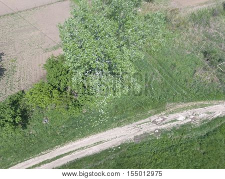 Top View Of A Silver Poplar. The High Poplar Tree