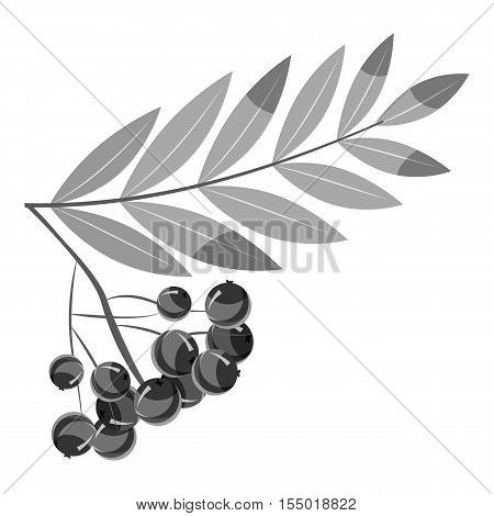 Rowan branch icon. Gray monochrome illustration of rowan branch vector icon for web