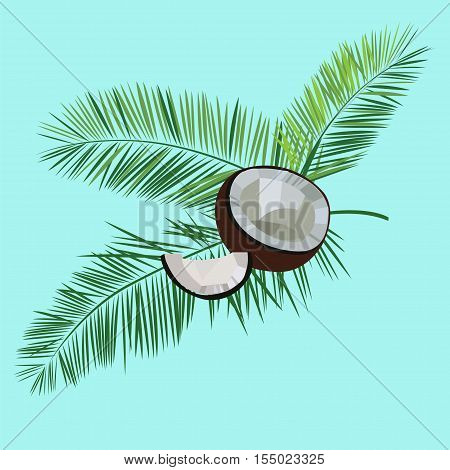 Coconut and palm leaves vector isolated illustration on blue background. Image of coconut and pulm leaves. Vector composition with coconut. Flat coconut image.