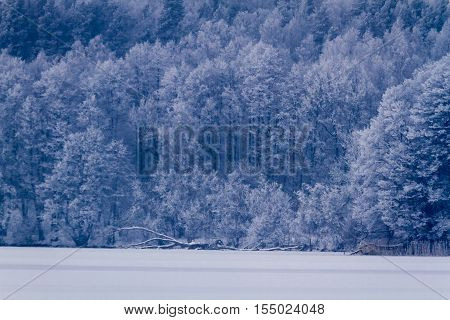 Frozen Forest At The Lake In Winter