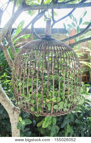 Plant pot applied from bird cage stock photo