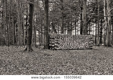 Black and white shot of a woodpile in a forest at fall