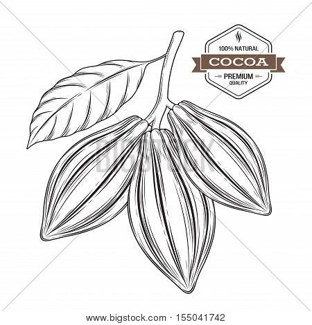 Cocoa pods vector illustration. Cocoa label logo emblem symbol.
