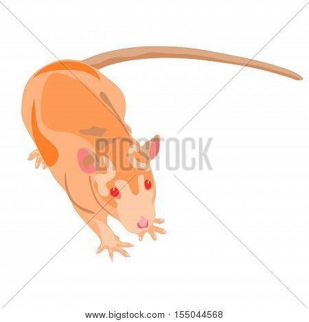 Rat isolated on the white (transparent) background. Colorful cute rat illustration. Vector illustration eps